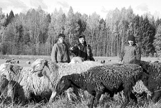 Фермерское хозяйство З.Н. Микаилова